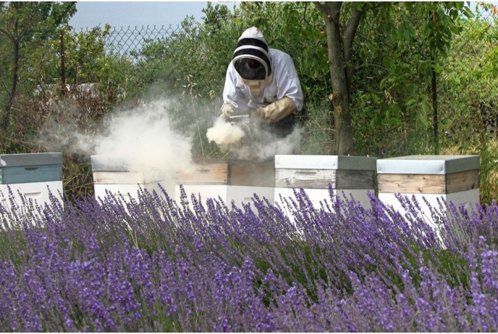 Beekeeping, a hobby on the rise