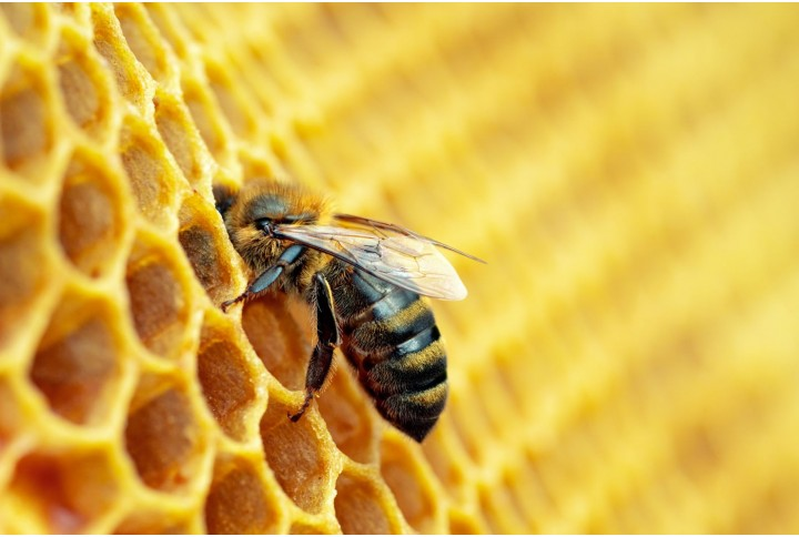 Surprising facts about bees